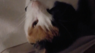 You wont believe it! Cat sings a song while up upside down!  - Video