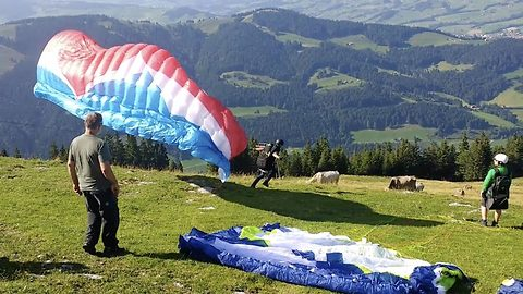 Hilarious moment paraglider well and truly beefs his take off as he collides with cow