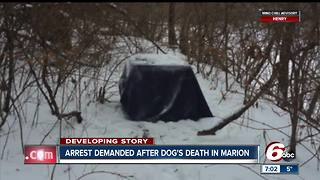 Arrest demanded after dog was found abandoned in a crate, left to die in sub-zero temperatures - Video