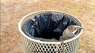 Amazing slow motion footage of squirrel jumping out of trashcan