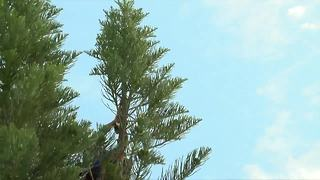 Cat rescued from tall tree - Video