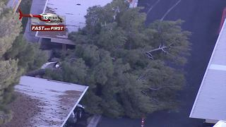 Tree falls on cars in apartment complex - Video