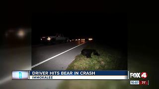 Driver Hits Bear in Overnight Crash - Video