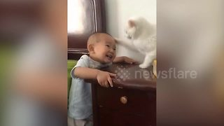 Cat makes baby cry with vicious slap to the head - Video