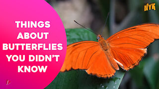 Top 4 Facts About Butterflies