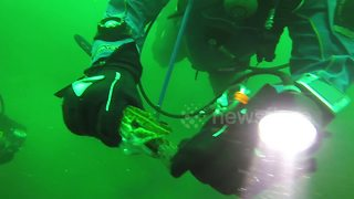 Scuba fisherman finds live fish inside a larger fish - Video
