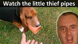 Watch The Little Thief Pipes!  - Video