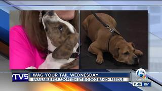 Wag Your Tail Wednesday 8/22/18