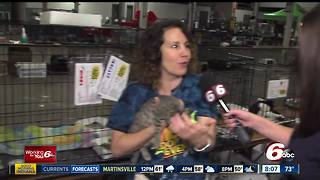 Indy Mega Adoption Event continues at the State Fairgrounds - Video