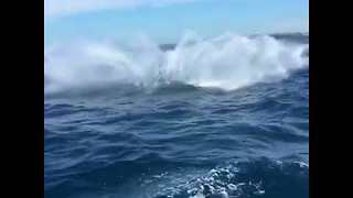 Humpback Breaches Really Made a Woman's Birthday Whale Watching Trip - Video