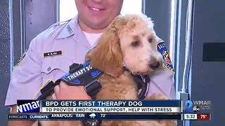 Baltimore Police Department gets first therapy dog - Video