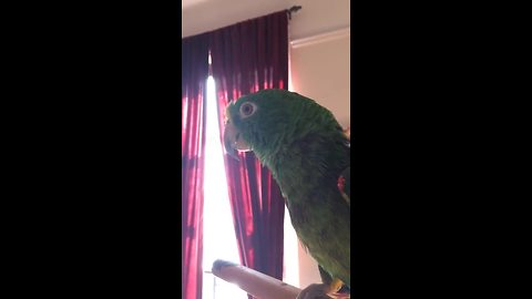 Parrot Sings A Beautiful Duet With Its Human