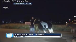 VIDEO: Wisconsin police chase down loose horses - Video