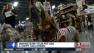 Making Sure Your Pet Has a Happy Halloween