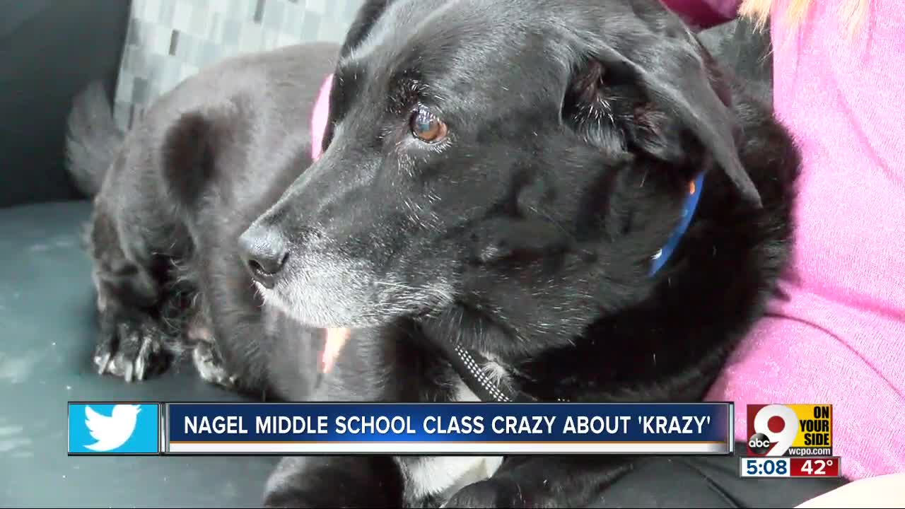 'Krazy' the black lab brings calm to Nagel Middle School students