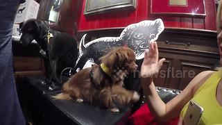 Just an adorable dog giving a high five - Video