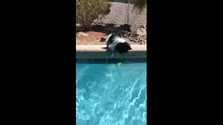 Cute dog manages to get ball from pool without getting wet - Video