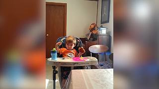 Toddler's Toast Mystery - Video