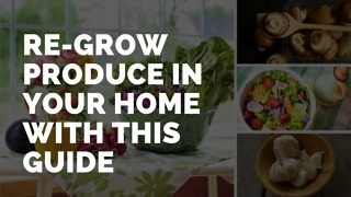 Re-grow produce in your home with this guide - Video