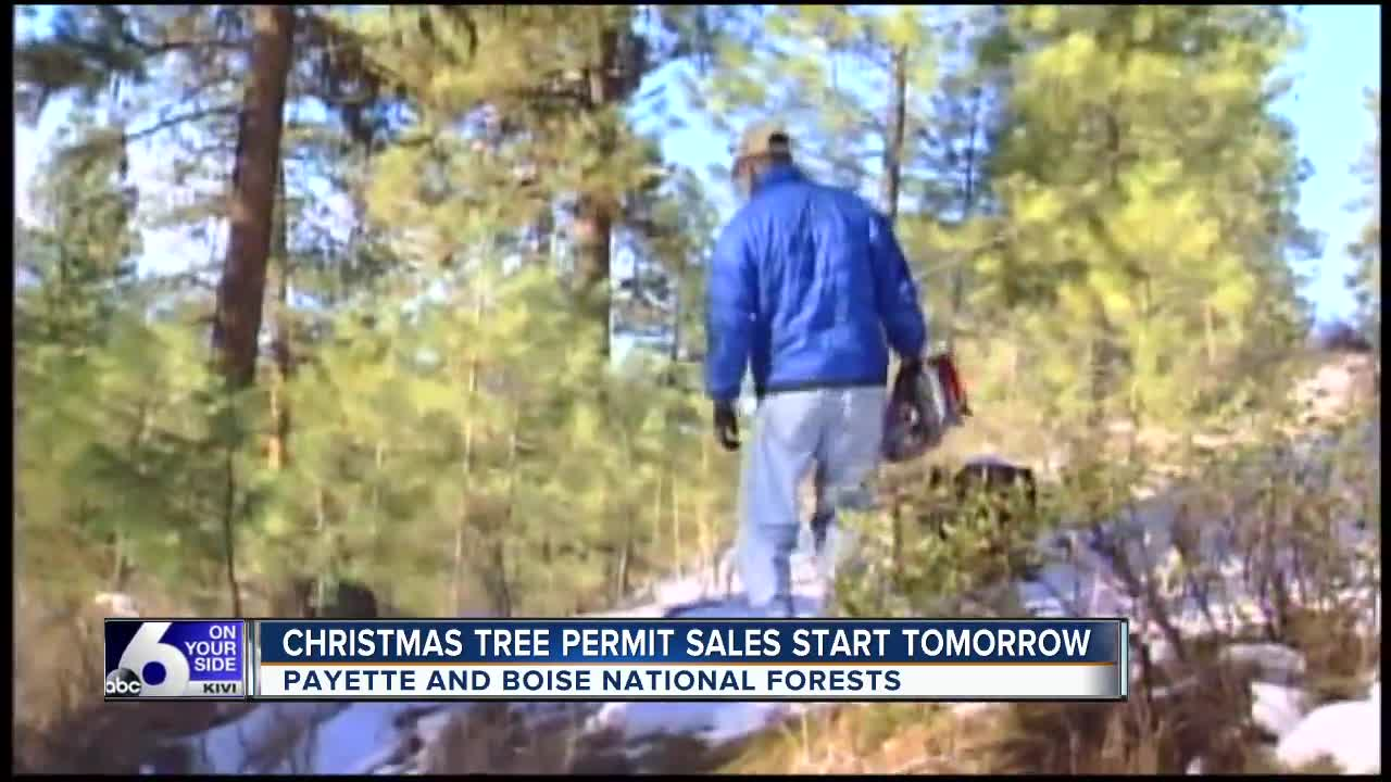 Christmas Tree forest permits