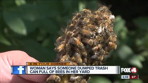 Woman says someone dumped trashcan full of bees in her yard