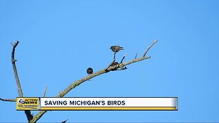 Saving Michigan's birds