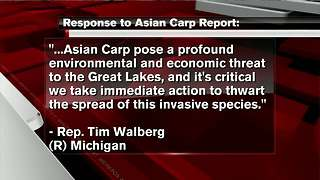 Report to list options for strengthening Asian carp defenses - Video