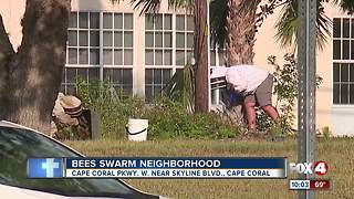 Bees swarm neighborhood - Video