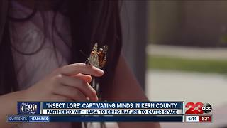 Made in Kern County: Insect Lore - Video