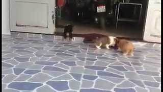 Mischievous puppies - So cute - Video