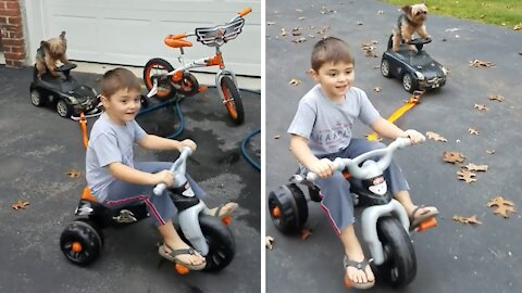 Yorkie gracefully rides toy car while towed by kid on bike