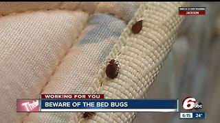 Indy one of the worst 15 cities for bed bug infestations - Video
