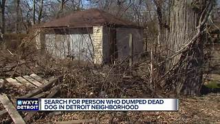 Detroit Dog Rescue offering reward after dog found starved to death - Video