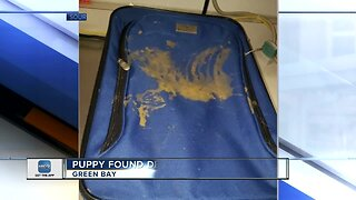 Dead puppy found in abandoned suitcase