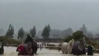Horses Rescued From Floodwaters at Dunedin - Video