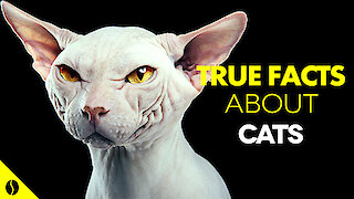 True Facts About Cats