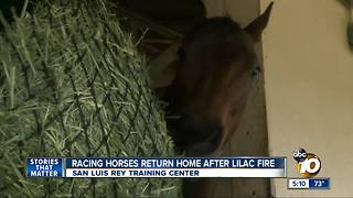 Racing horses return home after Lilac Fire - Video