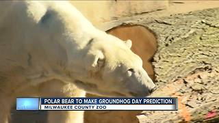 Milwaukee County Zoo using a polar bear to make Groundhog Day prediction this year - Video