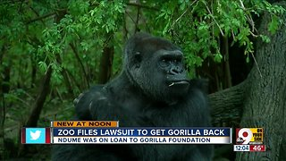 Cincinnati Zoo files lawsuit in effort to bring Ndume the gorilla back