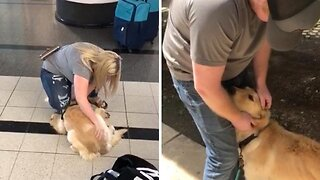 Adorable moment pooch rescued from korean 'high kill' shelter meets parents for first time