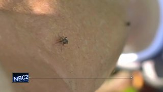 Dead crow found with West Nile in Manitowoc Co. - Video