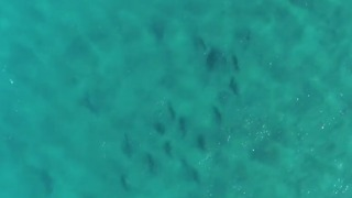 Stunning Aerial Footage Captures Shark Feeding Frenzy Off North Stradbroke Island - Video