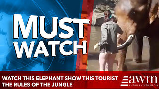 Watch this elephant show this tourist the rules of the jungle - Video