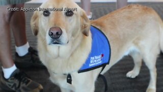 Therapy Dogs return to Appleton International Airport