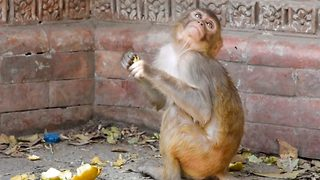 Baby monkey loses it with flies while snacking outside temple