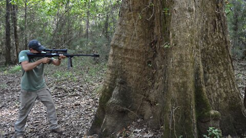 How Big of a Tree Does it Take to Stop a .50BMG?