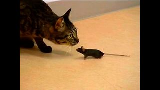 Cat and Mouse Best Friends