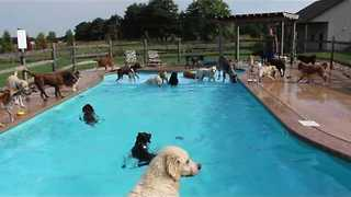 Doggy Daycare Doggos Enjoy a Dip in the Pool - Video