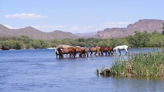SHH! 6 secrets about Salt River Wild Horses - ABC15 Digital