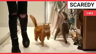 Adorable pair of cats constantly WOBBLE due to rare condition